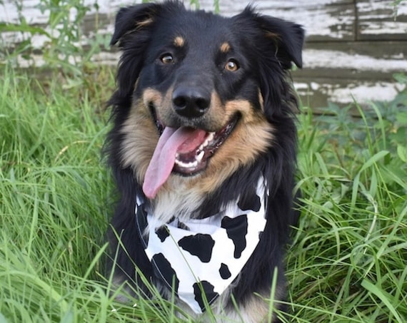 Cow Print Dog Bandana, Collar Slips Thru, Fun Pet Bandana, Made in Montana, Assistedly by Young Adults with Special Needs, Ready to Ship!