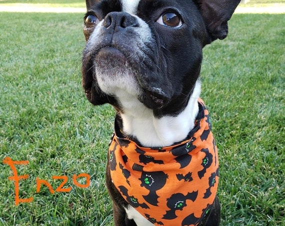 LAST ONE, S, Batty Fun Dog Bandana, 2-Sided Bats & Pumpkins, Free Shipping, Assistedly Made in Montana by Special Olympic Athletes