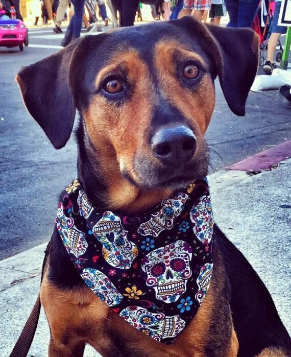 Dia de las Muertos Pet Bandana, Special Needs Project, Dog Cat Gift, Collar Slips Thru, Sugar Skulls, Pet Costume, Ready to Ship!