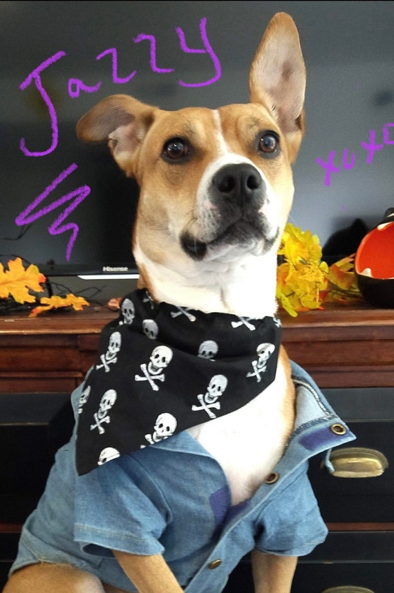 Skull Pet Bandana For Dogs or Cats, Posh Pirate Jolly Roger Trick or Treat Halloween, Free Shipping, Assistedly Made by Special Olympians
