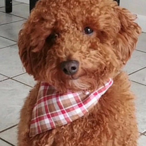 Plaid Pet Bandana, Made in Montana, Dog Cat Thanksgiving Christmas Gift, Collar Slips Thru for Autumn, Assistedly Made By Special Olympians