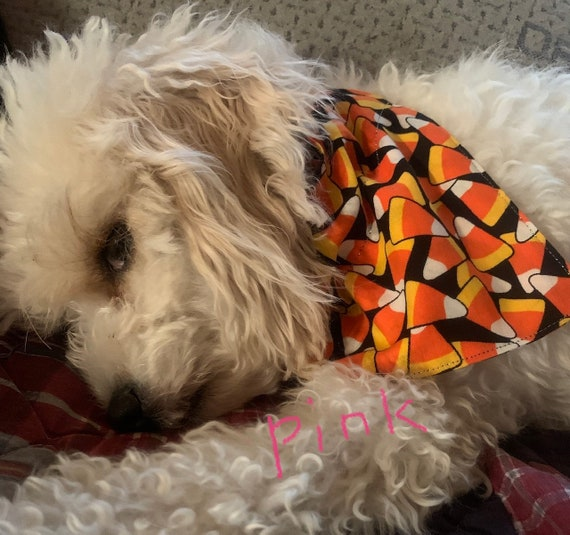 Candy Corn Pet Bandana, Assistedly Made by Young Adults with Special Needs, Fits Over Pet Collar, Trick or Treat, Dog Costume