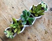 Succulent Planter, Indoor Planter, Mini Planter, Succulent Pot Gift, Ceramic Cactus Pot, Gardener 39 s Gift, Garden Lover, Succulent Pot