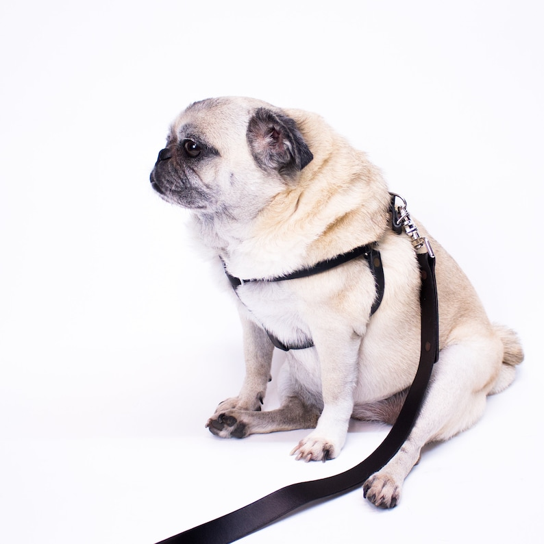 Dog Harness and Leash Set Personalized Step In Black Leather Harness and Leash Custom Dog Harness Dog Leash Step In Harness Pug Harness