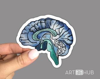 Anatomical Brain Sticker, Human Brain Sticker, Brain Decal, Psychology Brain Sticker, Car Sticker, Laptop Sticker