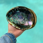 Large Rainbow Abalone Shell / Perfect for Smudging/