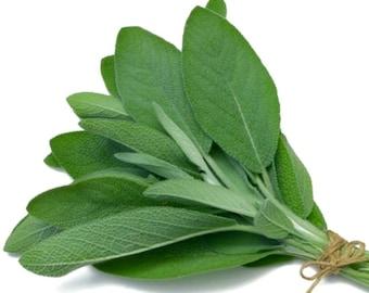 Organic NON-GMO Broadleaf Sage 25 Seeds Perennial savory flavor