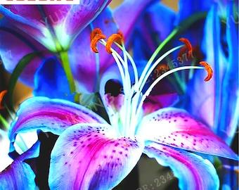 a11e4e6e6 2pcs ,True Magic Lily Bulbs, Lily Flower, Not Lily Seeds, Rare Beautiful  Flower