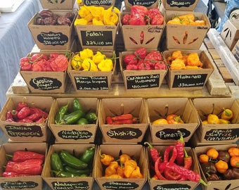 Fresh Pepper Pods Scorpion, Habanero, Carolina Reaper, Cayenne, Jalapeno, 7 Pot, Ghost,  Aji pepper varieties and more