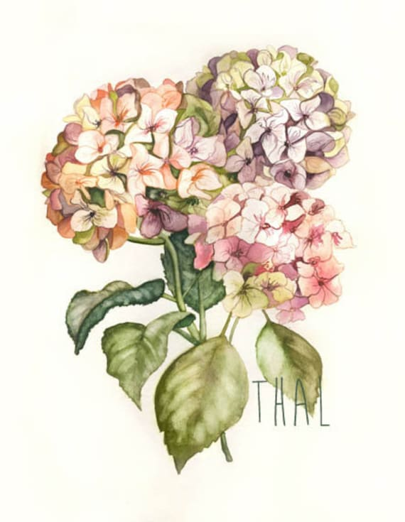 Watercolor Of Flowers Hydrangeas Paint Art Print Botanical Etsy