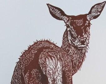 Red Deer Hind, an original, handprinted, limited edition linocut print