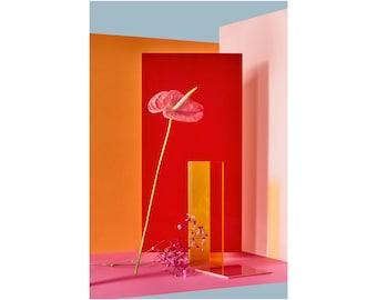 Modern Flower: Still Life, Fine Art Photography, Contemporary Art, Abstract Flower, Interior Design, Home Decor (Limited Edition of 100)