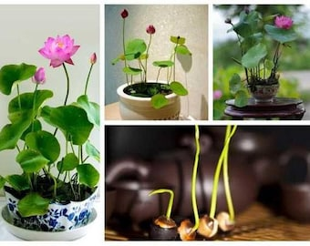 Seed Plant Good