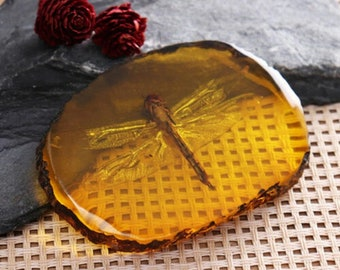 Amber Dragonfly Fossil Insects - Fossil Insect Specimen