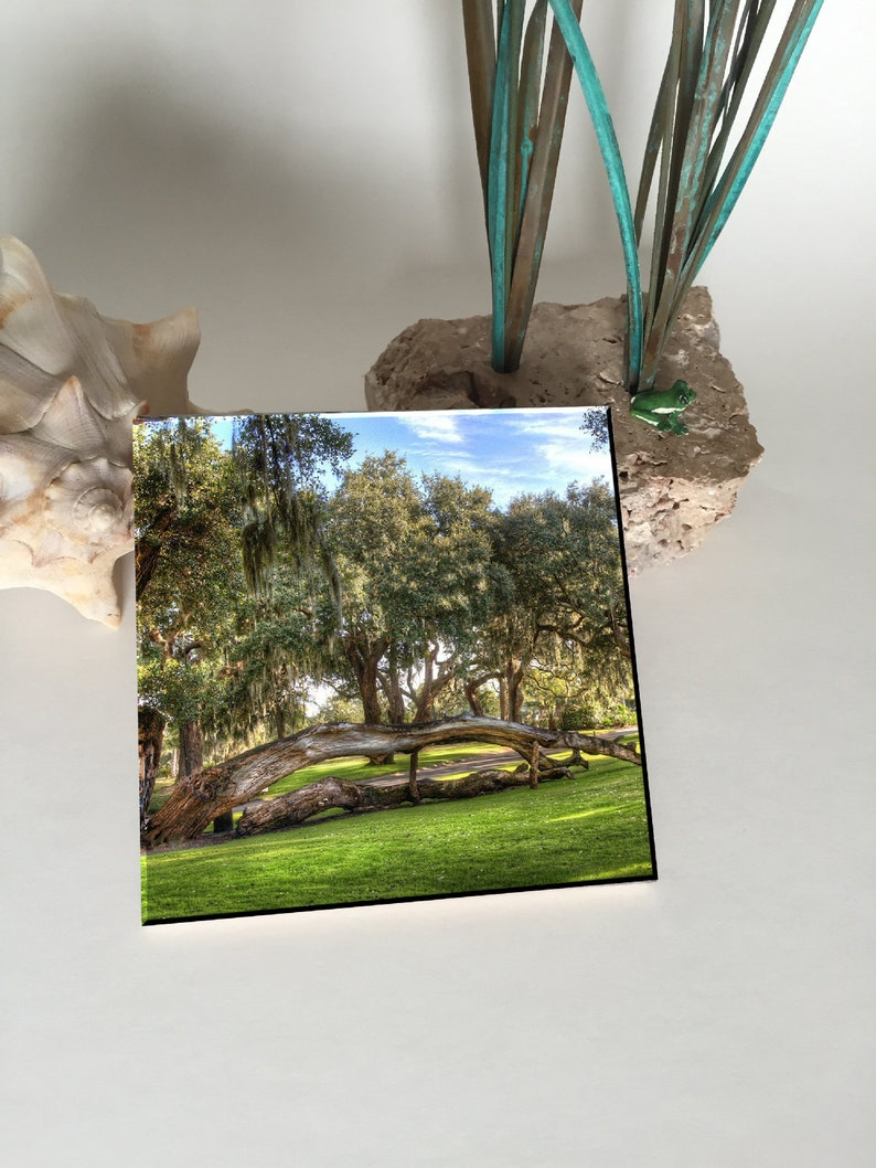 Old Oaks Ceramic Coaster image 0