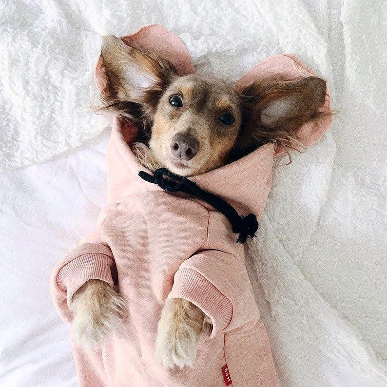 Hoodie with Ears for Dachshunds and Small Dogs image 0