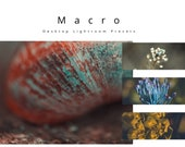 Desktop Lightroom Presets - Macro Orange Colour