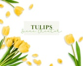 Tulips - Scene Creator, Mockup - Commercial Use