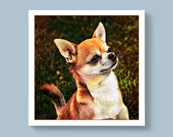 A Portrait Photo of a Short-Haired Chihuahua Breed of Dog, Blank or Personalised Message For Special Ones