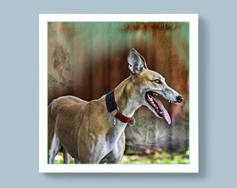 A Side Profile Portrait Photo of a Greyhound Breed of Dog, Blank or Personalised Message For Special Ones
