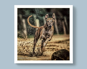 A Portrait Photo of a Racing Greyhound Breed of Dog, Blank or Personalised Message For Special Ones
