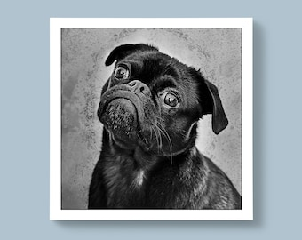 Black and White Portrait of Puppy Pug Breed of Dog, Blank or Personalised Message For Special Ones