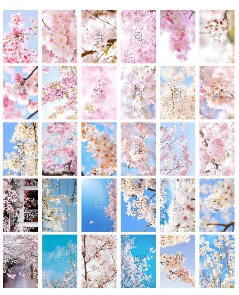 30pcs Sakura Postcard Set Flower Postcard Floral Postcards Cherry Blossom Postcards