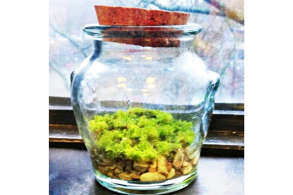 Patchouli Moss in Vintage Glass