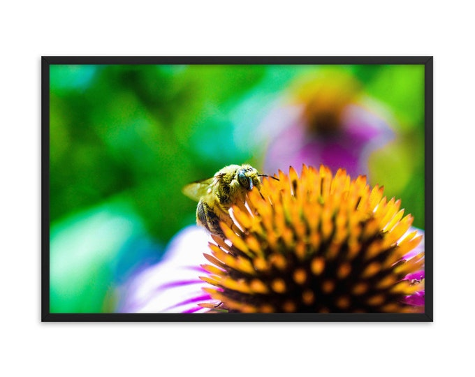 Featured listing image: Bee Framed poster
