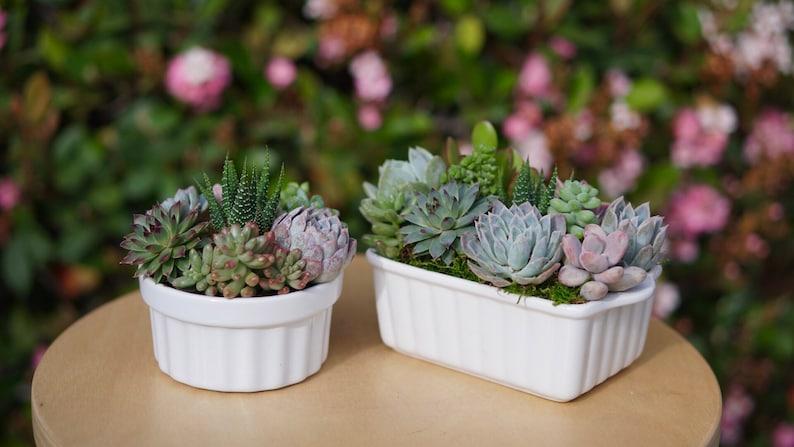 Succulent Arrangement Ceramic Planter
