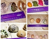 Assorted Shell Sets for HERMIT CRAB Pets Turbo Shells - Authentic Seashells - Pet Home for Hermies, Small Reptiles, Arachnids, Aquariums
