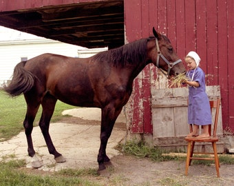 """97592f9d Amish Photography, """"Ada's Love"""" Amish Print, Art Print, Fine Art  Photography, Country Decor, Pet Photography, Gift for Her"""