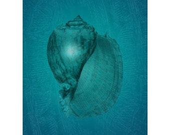 Sea-Light Serenade   Sea Shell   Wall Art   Blue Green   Undersea Water Creature   Pattern Echoes   Digital Art Print by Brad Mager