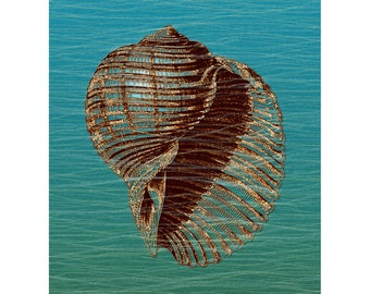 Delicate Drifter   Sea Shell   Wall Art   Blue Green Gold   Undersea Water Creature   Digital Art Print by Brad Mager