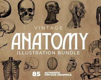 Skull and Bones Clipart. 85 Vintage Anatomy Illustrations Bundle - Skulls, Bones, Bodies and much more! Includes EPS - PNG - JPEG filetypes.