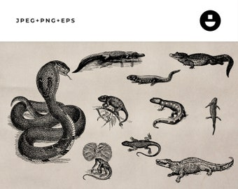 Vintage Animal Illustrations of Snakes, Alligators and Amphibians - Instant Download Clipart Set 9