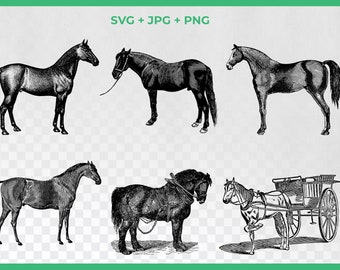Vintage Horse SVG Clipart, Black and White Pony, Carriage Clipart, Farm SVG, PNG Graphics, Farm Animal Clipart,Stallion png Clipart