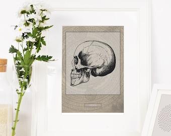 Skull Print, Downloadable Prints,  drawing of skull, scientific drawings, antique looking drawings, skull