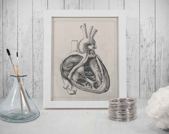 Heart Print, Downloadable Prints,  drawing of heart, scientific illustration, antique looking drawings, heart