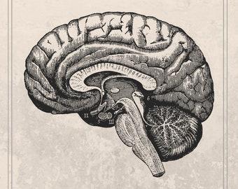 Brain Print, Downloadable Prints,  drawing of brain, scientific illustration, antique looking drawings, brain