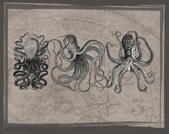 Octopus Print, Downloadable Prints,  drawing of octopus, scientific drawings, antique looking drawings