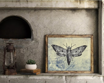 Insect Print, Downloadable Prints,  Moth, Insect print, antique looking drawings