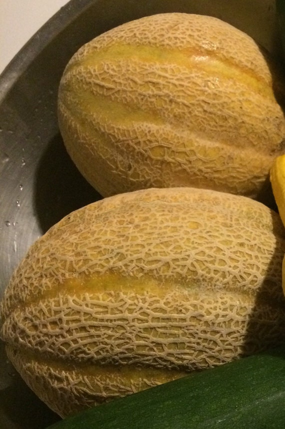 Cantaloupe Seeds Etsy The most popular melon in the us! etsy