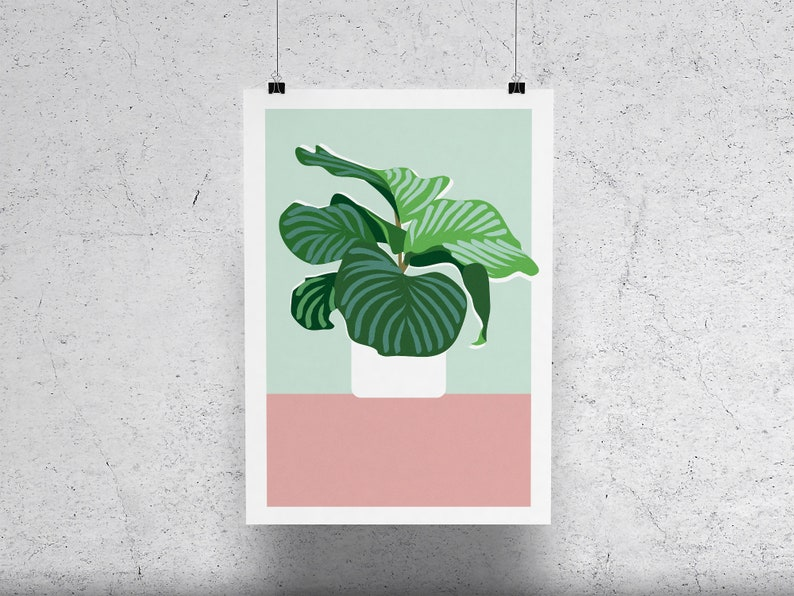 fiddle leaf fig ficus plant print colourful house plant image 0