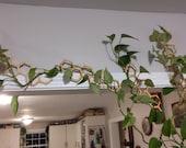 Honeycomb Hanging Plant Trellis 5 Pack Multiple Sizes Colors