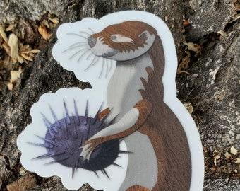 Sea Otter sticker, bumper sticker, laptop sticker, vinyl decal, children's book, kid's art sticker, children's art, ocean art sticker