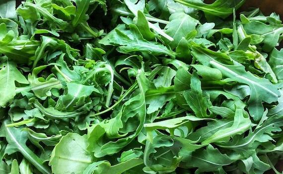a Mediterranean green salad leaf Mmmmmmmm..Free Shipping!! Arugula Roquette