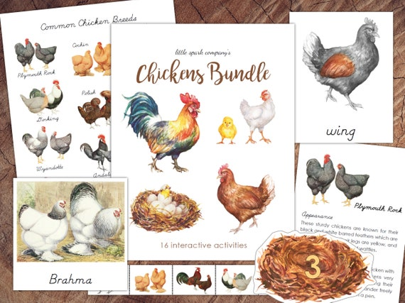 Chickens Bundle Preschool Literacy Math DIGITAL DOWNLOAD