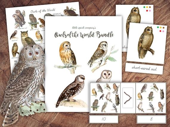 Owls of the World Bundle Preschool Literacy Math DIGITAL