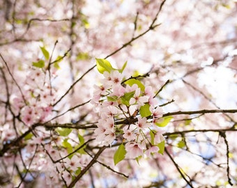 Signs of Spring Print